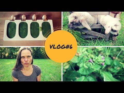 VLOG#6: Darmreinigung, Parasitenkur, grüne Säfte, Wildkräuter, Trockenfasten, barfuß und Schilddrüse