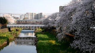桜と鉄道 2018年