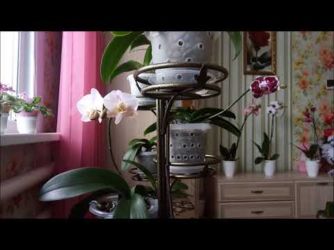 Почему опадают бутоны у орхидеи зимой