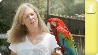 Parrot says Crap! - Awkward Pet Moments