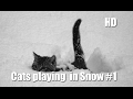 Cats playing in Snow #1 - Funny Cats Compilation 2017