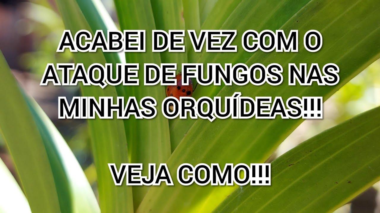 FIZ ISSO E ACABEI DE VEZ COM OS FUNGOS NAS MINHAS ORQUÍDEAS!!!