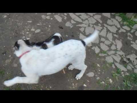 A  brave  cat  versus  a  dog  battle  Funny Videos 2016