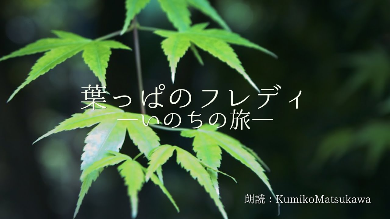 葉っぱのフレディ―いのちの旅― 朗読 KumikoMatsukawa - YouTube
