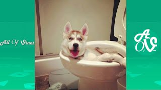 Try Not To Laugh Watching Funny Dog Videos | Dogs Funny Moments 2021