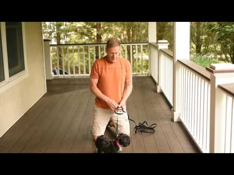 Trainer Joe Teaching your Dog the Sit and Stay Command