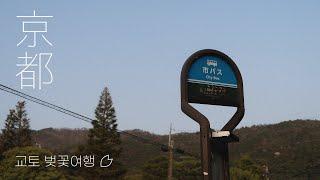 [vlog] 작년 봄, 교토로 떠나는 랜선 벚꽃 여행