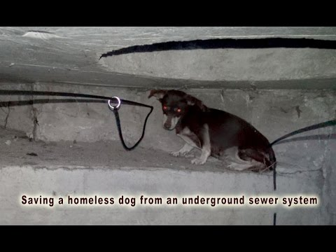 Saving a homeless dog from an underground sewer system.  Please share.