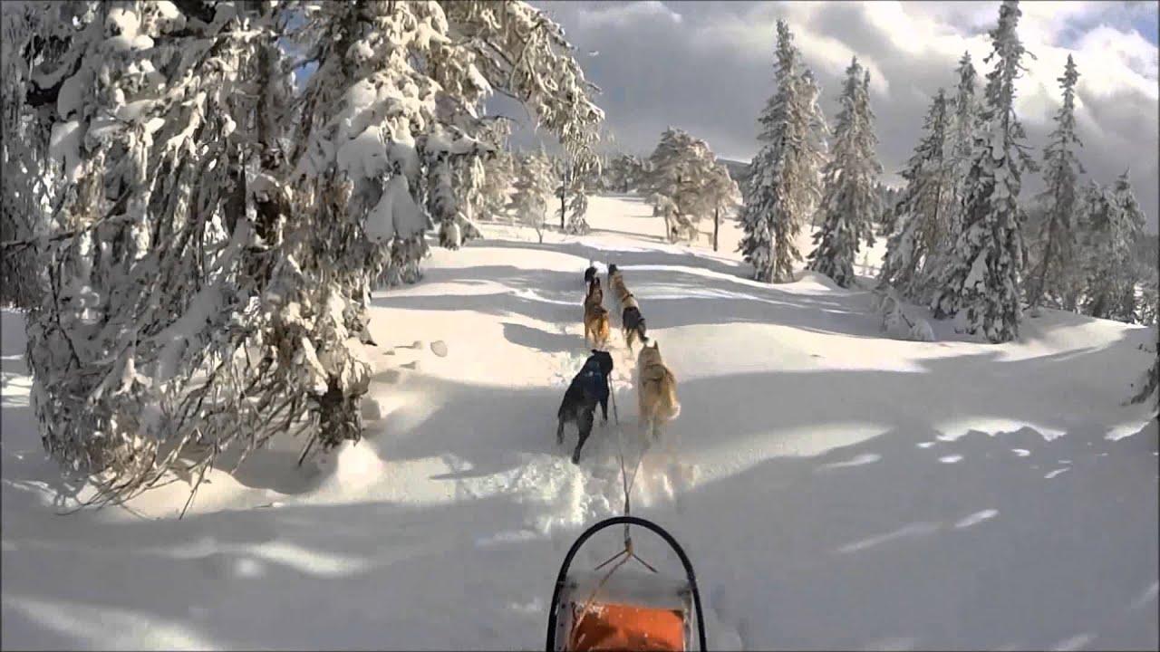 dog sledding video - HD1920×1080