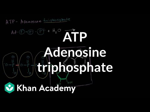 ATP: Adenosine triphosphate | Energy and enzymes | Biology | Khan Academy