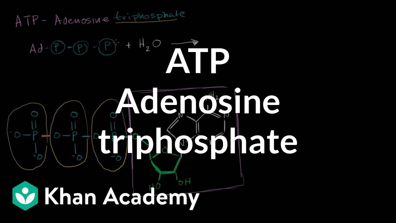 hydrolysis of adp equation