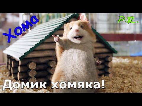 Смотреть Домик хомяка. Пробуждение хомячка Хомы