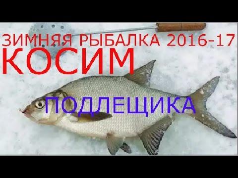 няя рыбалка в камышинезим Расширение