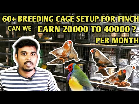Zebra Finch Mutation Breeding Tips And Care /earning Explained /Tamil Part-2