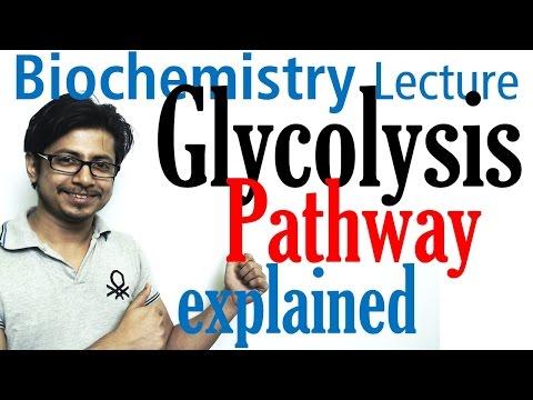 Glycolysis biochemistry
