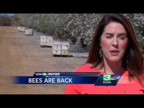 Warm Weather Bringing Bees Back