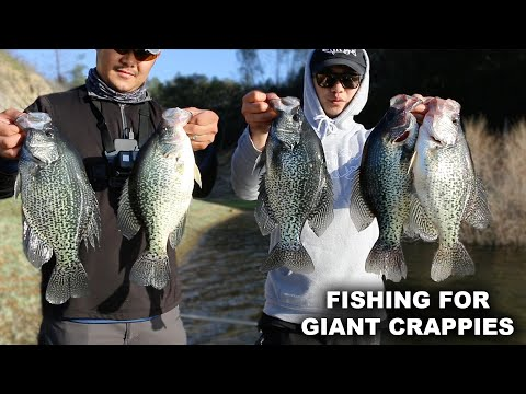 fishing-for-giant-crappies--i-caught-my-pb-slab!