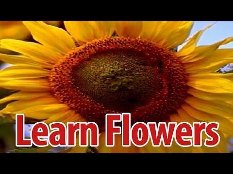 Learn Names of Flowers in Kannada