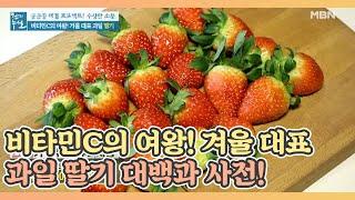 비타민C의 여왕! 겨울 대표 과일 딸기 대백과 사전! …