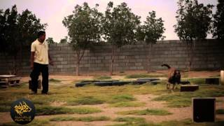 Awal K9 Explosives Detection Training