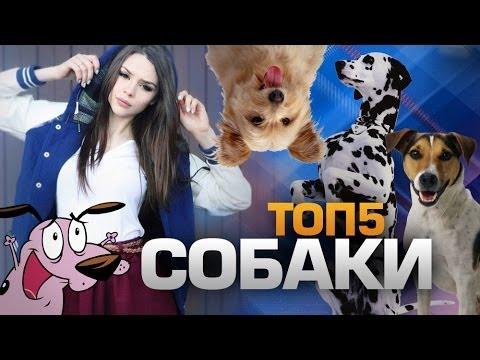 Собаки и щенки в Новосибирске даром Фото и цены НГС