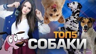 ТОП5 Пород СОБАК