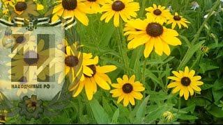 Видеофон: Желтые цветы (скачать, футаж)