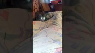 У кота Зеленые глоза