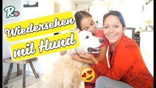 Wiedersehen mit Quentin - Wieder zu Hause - Vlog#1051 Rosislife