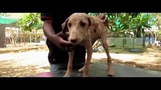 Больной чесоткой щенок страдал от мучений