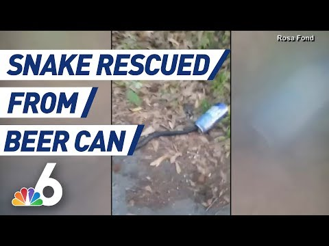 Mel Taylor - Florida Woman Saves a Snake with a Beer Can Stuck on it's Head!