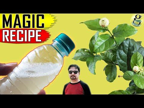 BEST ORGANIC PESTICIDE FORMULA | Home made Pest Control Recipe