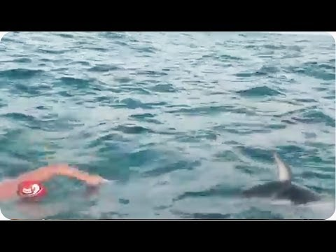 Adam Walker Swims  Cook Strait With Dolphins