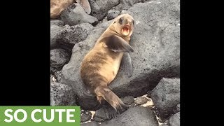 Baby sea lion sneezes & yawns in Galapagos Islands