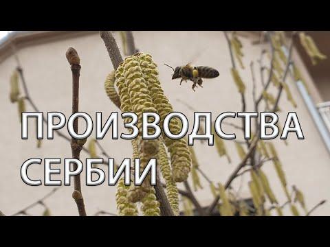 Производство пчелоинвентаря в Сербии. Экскурсия по предприятиям.