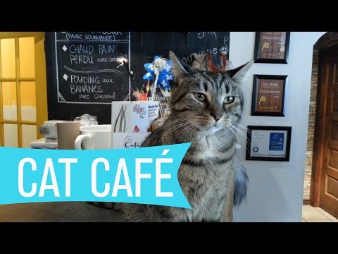 Montreal Cat Cafe - Café le chat l'heureux | WHAT'S UP MONTREAL? [VLOG]
