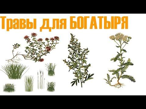 Травы для увеличения члена у мужчин - ТОП 3