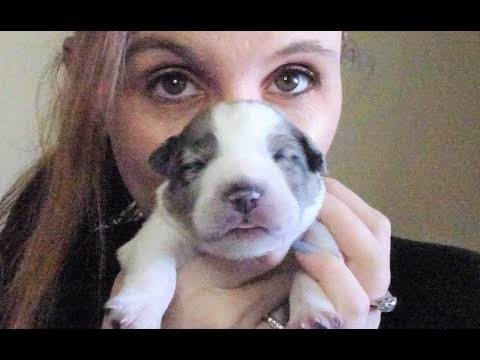 Update puppies Garden and birthday oh my