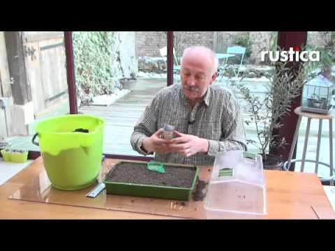 Semer le basilic en pleine terre doovi - Quand repiquer les tomates en pleine terre ...