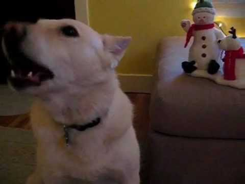 Dog singing jingle bells