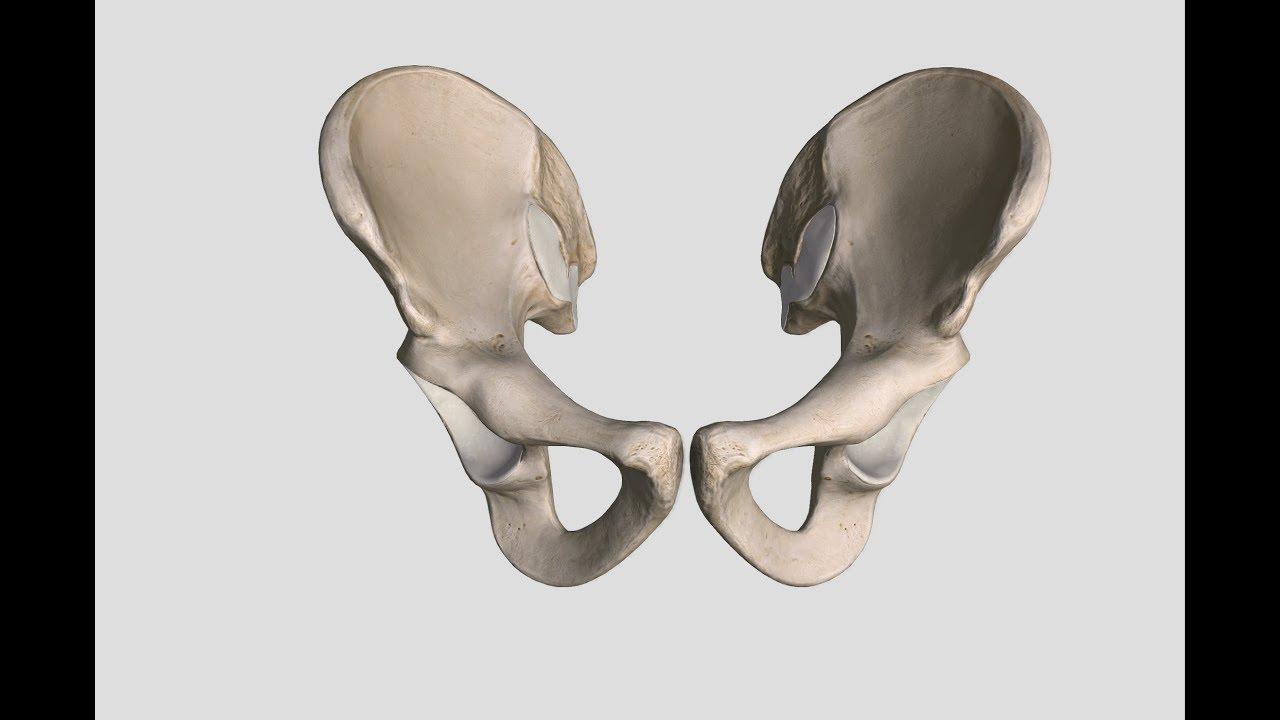 Appendicular Skeleton: Hip Bone. - YouTube
