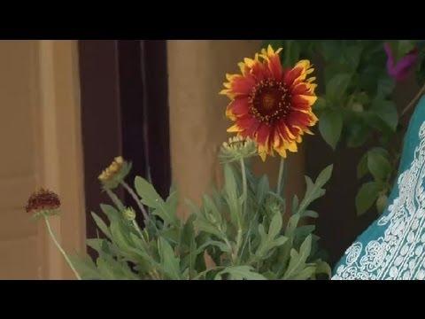 How To Start A Butterfly Garden : Garden Fun
