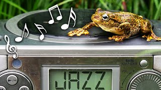 Do Frogs Enjoy Smooth Jazz? (Experiment)
