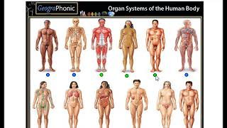 organ systems of the body, muscular, digestive, cardiovascular, respiratory, endocrine,