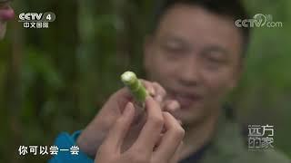 [远方的家]行走青山绿水间 栗子坪——大熊猫放归之乡| CCTV中文国际