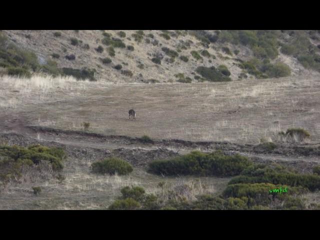 Lobos en Fuentes Carrionas
