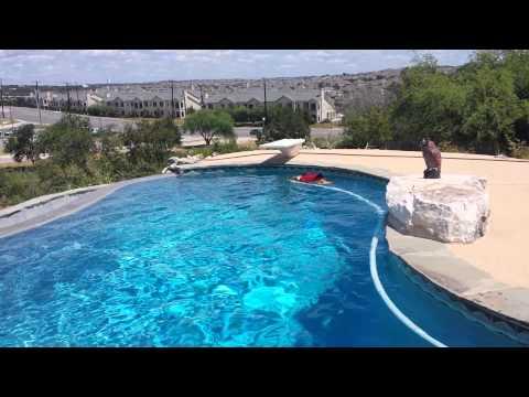 English Bulldog Swimming In The Pool