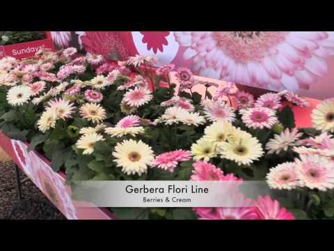 Spring Trials 2017: Florist