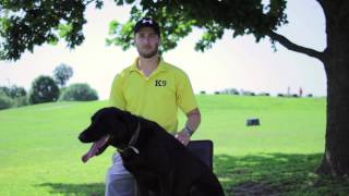 Dog Training - Tip Top K9