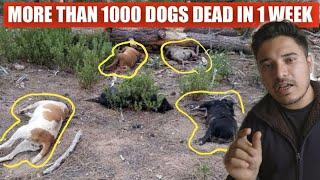 MYSTERIOUS VIRUS KILLING DOGS IN KOLKATA | *VERY IMPORTANT* | THE HIMALAYAN HUSKY